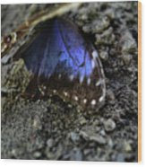 Butterfly Wings Wood Print