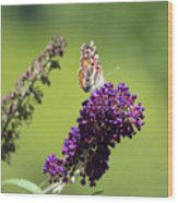 Butterfly With Flowers Wood Print
