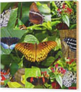 Butterfly Work 10 Wood Print