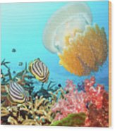 Butterflyfishes And Jellyfish Wood Print by MotHaiBaPhoto Prints