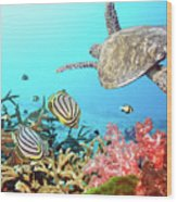 Butterflyfishes And Turtle Wood Print by MotHaiBaPhoto Prints