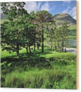 Buttermere Pines Wood Print