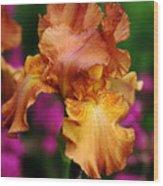 Butterscotch And Pink Wood Print