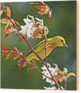 Buttery Yellow Warbler Wood Print