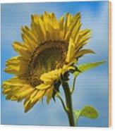 Buttonwood Sunflower 2 Wood Print