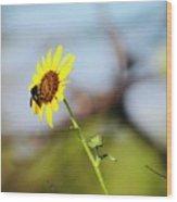 Buzy Bee Wood Print