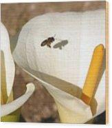 Buzz Buzz Wood Print