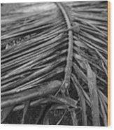 Bw Fallen Frond Wood Print