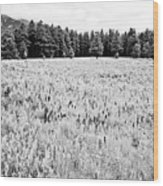 Bw Meadow Wood Print