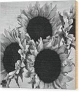 Bw Sunflowers #010 Wood Print