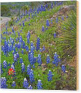 Hill Country Yucca Wood Print