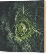Cabbage  Wood Print