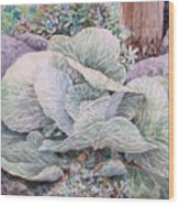 Cabbage Head Wood Print