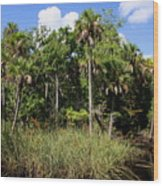 Cabbage Palms Along The Cotee River Wood Print
