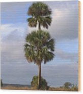 Cabbage Palms Wood Print