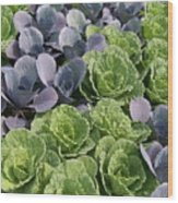 Cabbage Patch Wood Print
