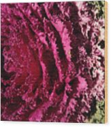 Cabbage Rainbow  Wood Print