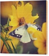 Cabbage White Wood Print