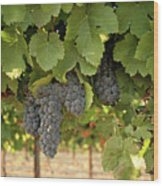 Cabernet Grapes One Wood Print