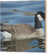Cackling Goose Wood Print
