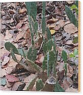 Cacti And Leaves Wood Print