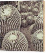 Cacti Community Wood Print