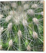 Cactus 1 Wood Print