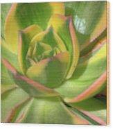 Cactus 4 Wood Print