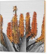 Cactus 5 Wood Print