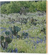 Cactus And Willow-wildflowers Of Texas Wood Print
