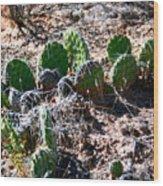 Cactus, Arches National Park Wood Print