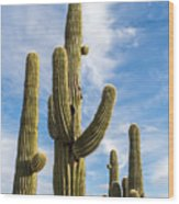 Cactus Arms Wood Print