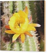 Cactus Bloom 033114e Wood Print