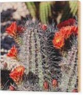 Cactus Bloom 033114f Wood Print
