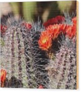 Cactus Bloom 033114g Wood Print