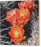 Cactus Bloom 033114j Wood Print