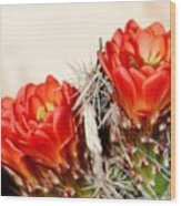 Cactus Bloom 033114m Wood Print