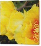 Cactus Bloom 1 Wood Print