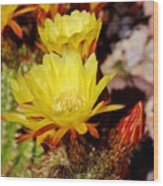 Cactus Bloom In Yellow 050715ab Wood Print