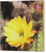 Cactus Blooms Yellow 050214g Wood Print