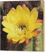 Cactus Blooms Yellow 050214k Wood Print