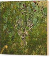 Cactus Buck Wood Print