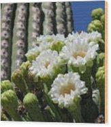 Cactus Budding Wood Print
