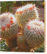 Cactus Buds Wood Print