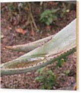 Cactus Cup Wood Print