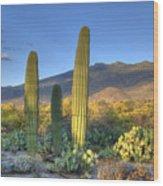 Cactus Desert Landscape Wood Print