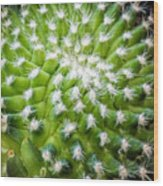 Cactus Feathers Wood Print