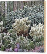 Cactus Field Wood Print by Rebecca Margraf