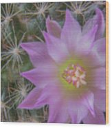 Cactus Flower #2 Wood Print