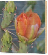 Cactus Flower And Buds Wood Print